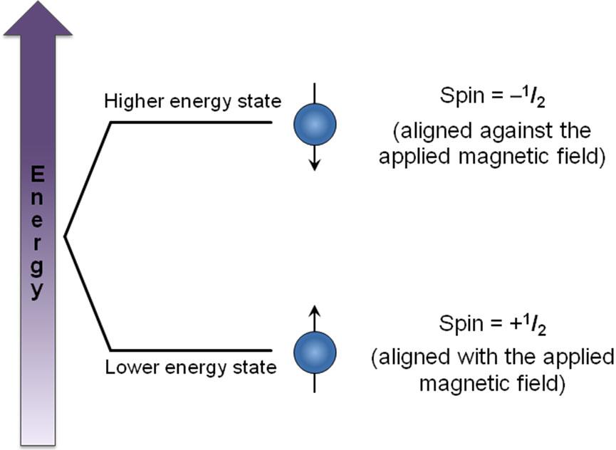 spin magnetska rezonancija